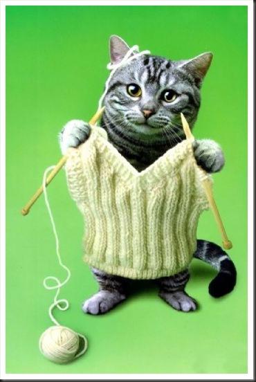 Что такое вязать кошку